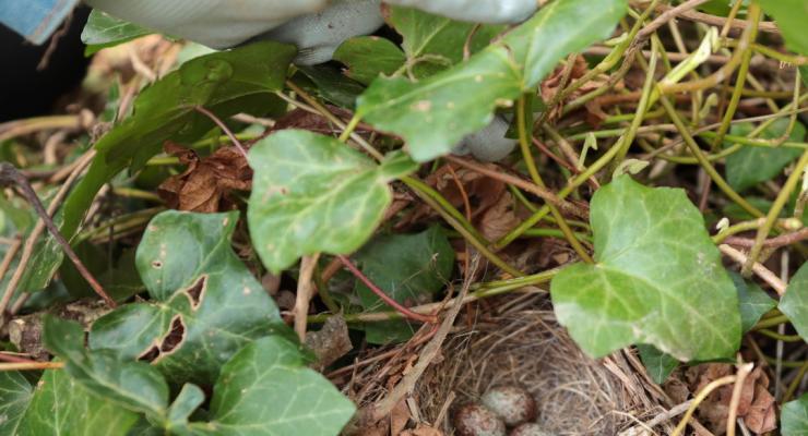 Nesting birds nearby; Do Not Disturb